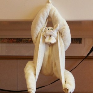 Towel Animal Monkey