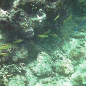 2011_03_07_Barbados_Cat_Turtle_Cruise_Reef_1