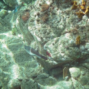 2011_03_09_St_Kitts_Cat_Snorkel_time_5