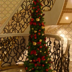 Tree outside the Taj Mahal Lounge