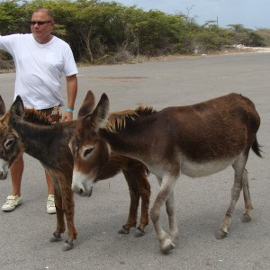 Lots of donkeys